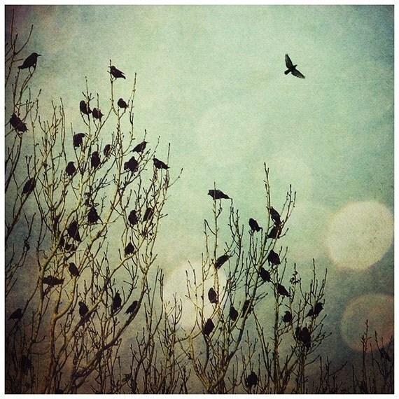 Flight, 5x5 Inch, Bird Print