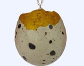 Gold-Lined Quail Egg Necklace
