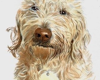 Cream Labradoodle with name