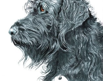 Black Labradoodle with name