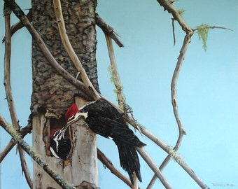 Pileated Woodpeckers - Fine Art Print
