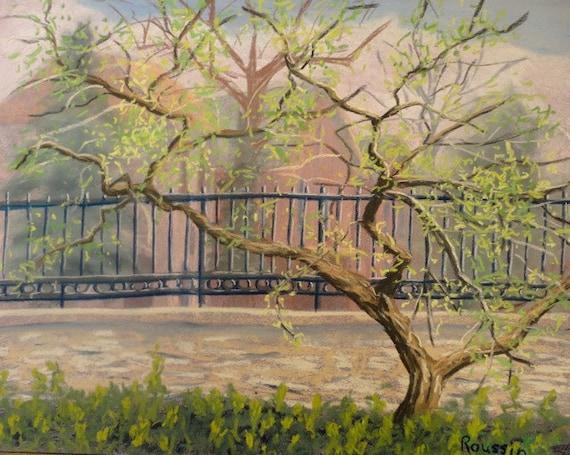 Plein Air Drawing Buckthorn Tree Plein Air