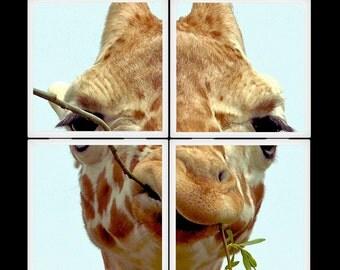 SeaBelly Baby Giraffe Ceramic Coaster Set