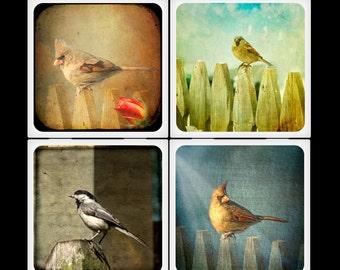 TheCamerasEye Vintage Birds Set Ceramic Coasters