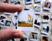 Custom Order For Adam : Mini Polaroid Magnets, Set of 14