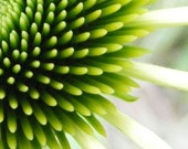 Touch - Floral Photo Note Card - Abstract Art Blank Card - Lime Green Coneflower - IN STOCK