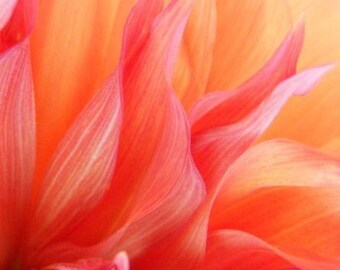 Flames ACEO - 2.5 x 3.5 Fine Art Photograph - Abstract Floral Art Card - IN STOCK