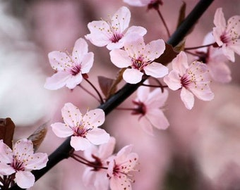 Blossoms - Set of Four Floral Note Cards - Blank Photo Cards - IN STOCK