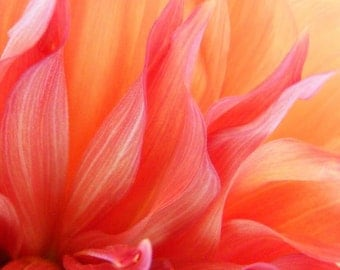 Photography - Flames - 8x10 Abstract Art Photo - Dahlia Macro Nature Print - IN STOCK
