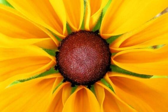 Susan - Blank Photo Greeting Card - Black Eyed Susan Flower - IN STOCK