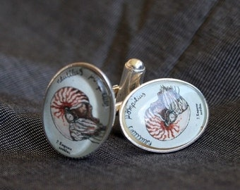 Nautilus cufflinks - natural history jewelry