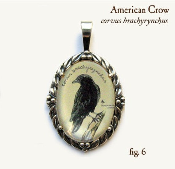 Crow pendant - natural history illustration jewelry