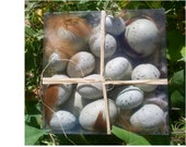 Bird Eggs Faux for decoration  Assorted sizes