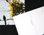 Bird in Tree Postcards (Set of 10)