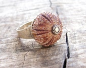 Sea Urchin Collection- Pink Ring
