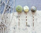Sea Urchin Collection - Three Bobby Hair Pins - Sea urchin, Pearl and Shell