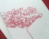 bright red detailed flower (set of 6 note cards)