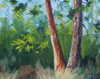 Landscape Oil Painting, Pine Trees, 8x10 on Canvas, Forest, Green, Wall Decor, Oregon, Ponderosa, Original, Blue Sky, Woodland Scene