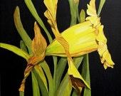 Daffodil I