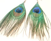 Peacock Feather Earrings on Sterling Silver Hooks