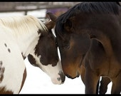 Two Horses 1-Original Fine Art Photograph