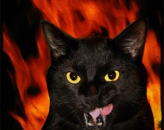 Hell Cat TTV Metallic Print