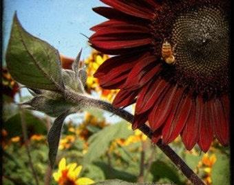 Red Sunflower TTV Metallic Print