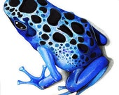 Sapphire Blue Poison Dart Frog - Realistic Nature Watercolor Painting by Annya Kai