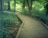 Path in the Woods Bartrams Gardens River Walk Forest Trees Philadelphia Fine Art Photograph