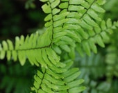 Fern Green Portal Tropical Paradise Costa Rica Print for Home Fine Art Photograph