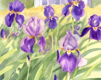 Faded Elegance White Farmhouse with Purple Iris giclee print