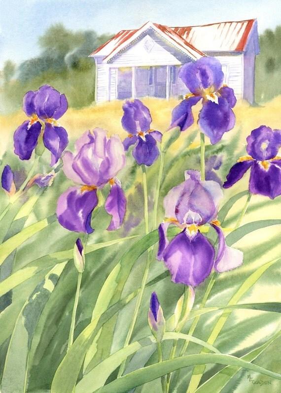 Faded Elegance White Farmhouse with Purple Iris giclee print