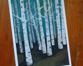 Large Birch Tree Forest Archival Print