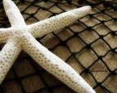 Starfish III -     5x7 photograph from Newfoundland