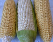 Play Food Series Corn Crochet Pattern PDF