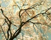 Cherry Blossom Photo, flower photography, art for girls room, narure photography, flower art, girls decor  -  Pink Showers - 8x10