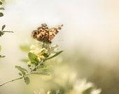 Butterfly Photography, Zen decor, Flower photography, Cottage Chic Summer decor, soft focus