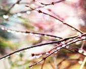 Nature photograph, Pastel colors, raindrops on tree branches, colorful home decor -   Tiny Drops of Light -  5 x 5