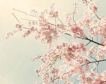 Cherry Blossom Art, Cherry Blossom Photo, nature photography, pink decor, pink & gray Decor, pink wall art  - The Softest Sky, 8x10