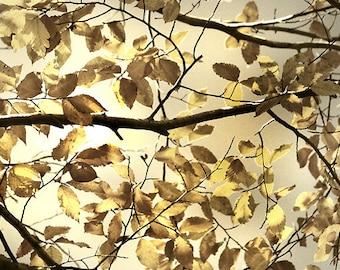 Tree photography, autumn art, autumn decor, tree art, gold wall art, tree photo, gold decor, yellow wall art - Falling Free