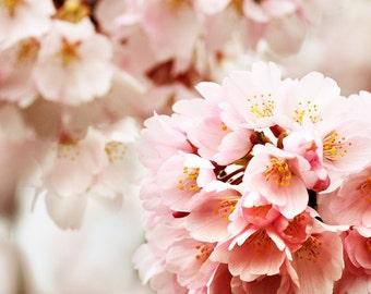 Pink Wall Art, Art for Girls Room, cherry blossom photo, Flower Decor, Flower art, cherry blossom art, girls room decor