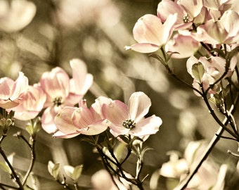 Bedroom photography, cottage decor, flower photography, bedroom decor, dogwood photo, pink decor -  Dogwood Dance, 8x10