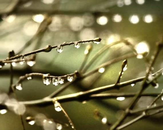 Rain Photo, nature picture, rain photography, rain drops, nature photography, olive green decor -  Where Light Bulbs Grow 8x10