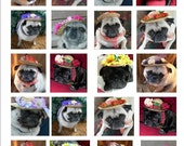 Portly Pug  Stickers