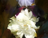 Southern Garden Digital Collage Painting Print Iris and Peony