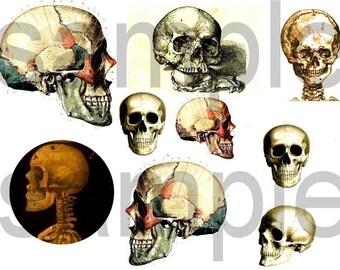 Antique SKULL Images Digital Collage Sheet