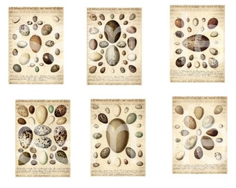 Antique Bird Eggs on Greek Hieroglyphics Base... ATC and ACEO Size ... Digital Collage Sheet