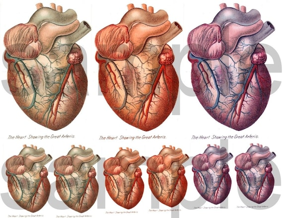 The Human HEART....from Antique Anatomy Illustration....Digital Collage Sheet