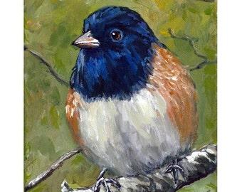 Junco Bird Art Print of Original Acrylic Painting, Oregon Junco on Branch