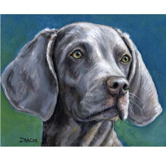 "Weimaraner Dog Art Print of Original Painting by Dottie Dracos, ""Weimar Portrait on Teal"""